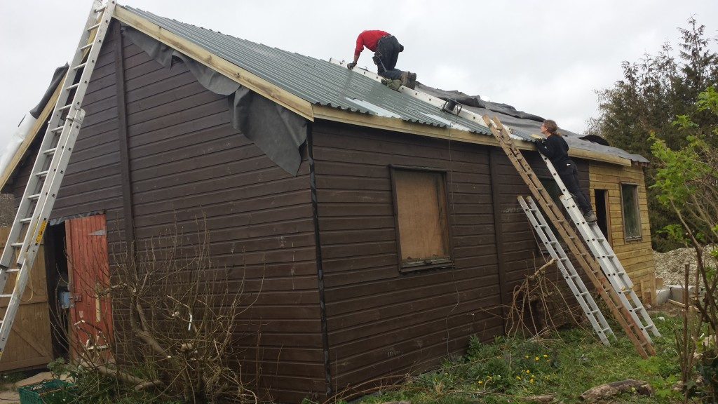 Work in action:- Replacing the shed roof, 2014.